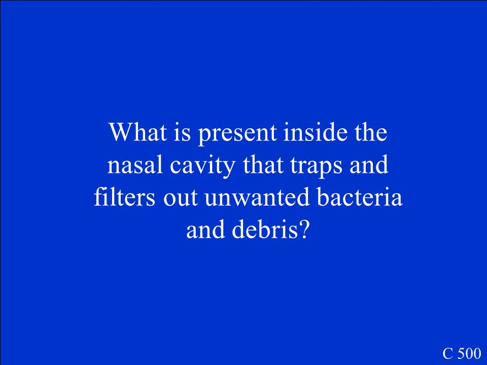 What is present inside the nasal cavity that traps and filters out unwanted bacteria and debris