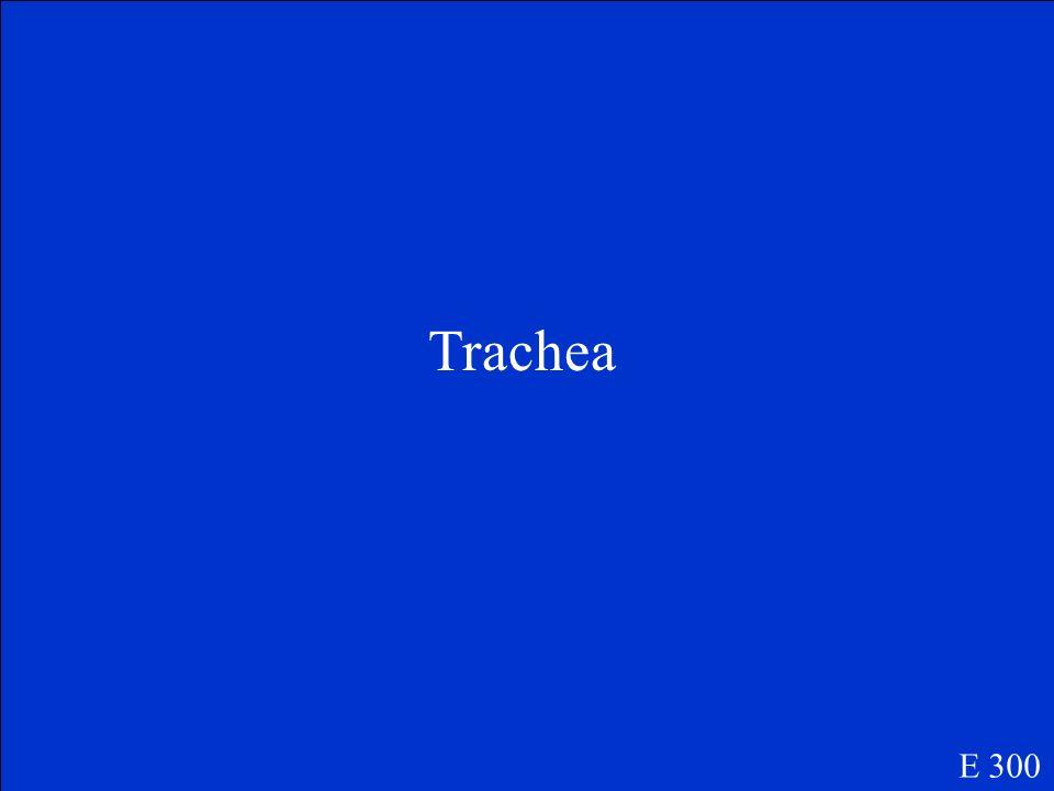 Trachea E 300