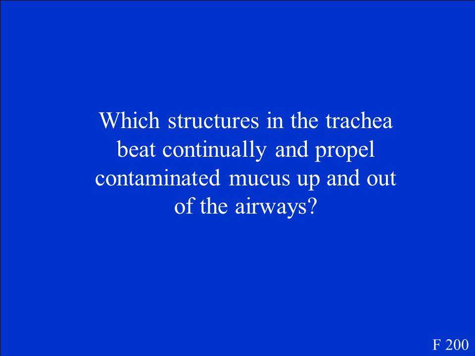 Which structures in the trachea beat continually and propel contaminated mucus up and out of the airways