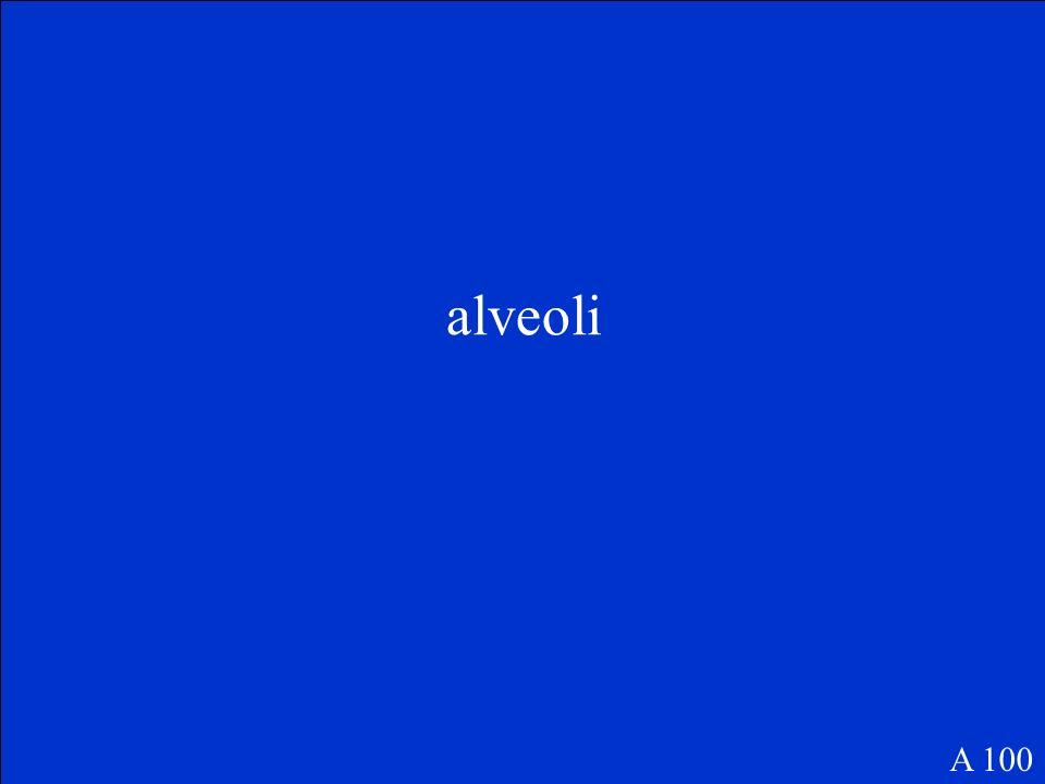 alveoli A 100