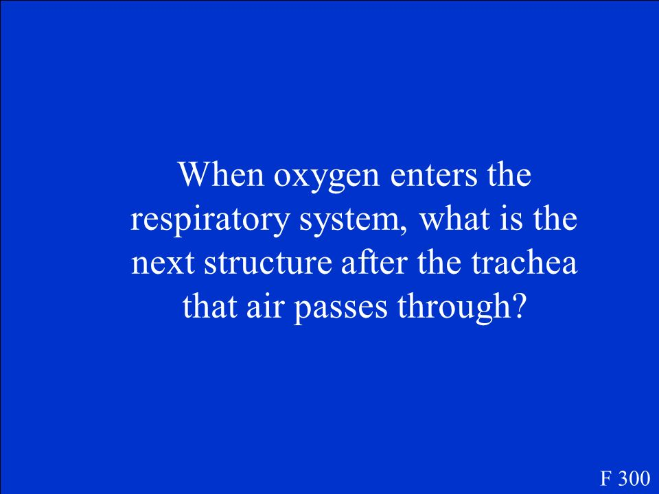 When oxygen enters the respiratory system, what is the next structure after the trachea that air passes through