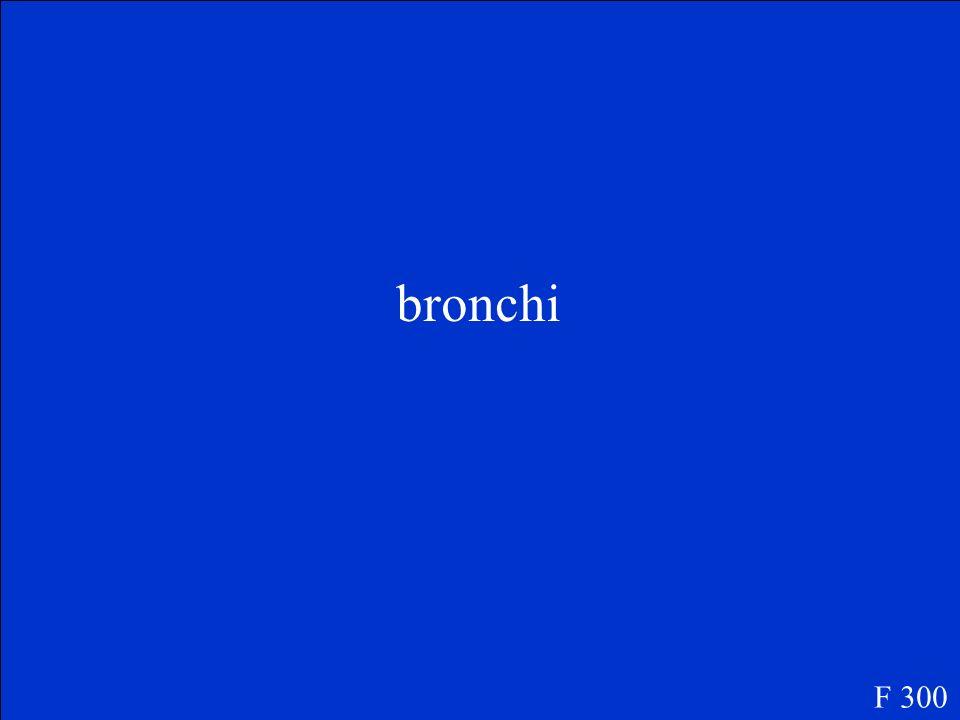 bronchi F 300