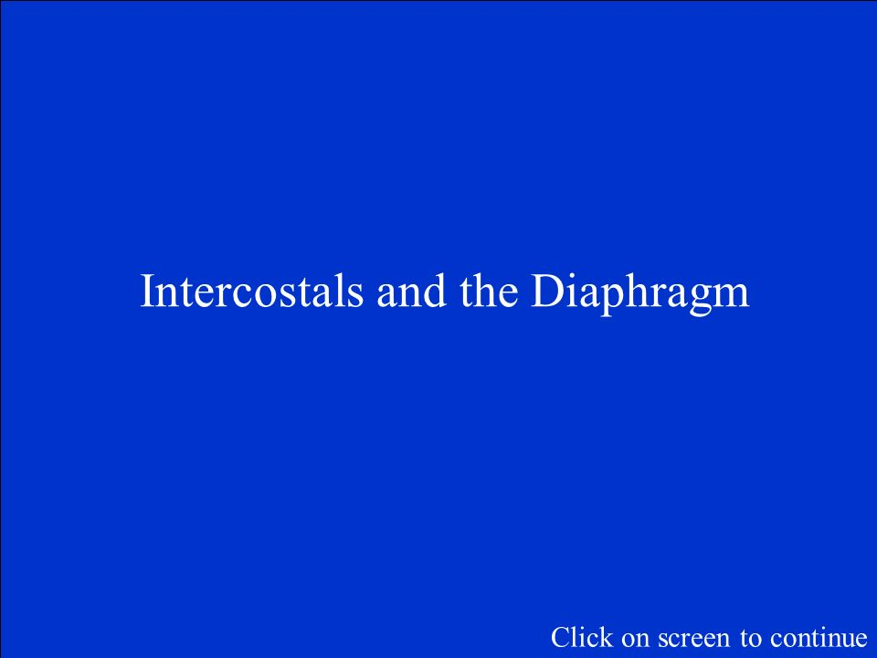 Intercostals and the Diaphragm