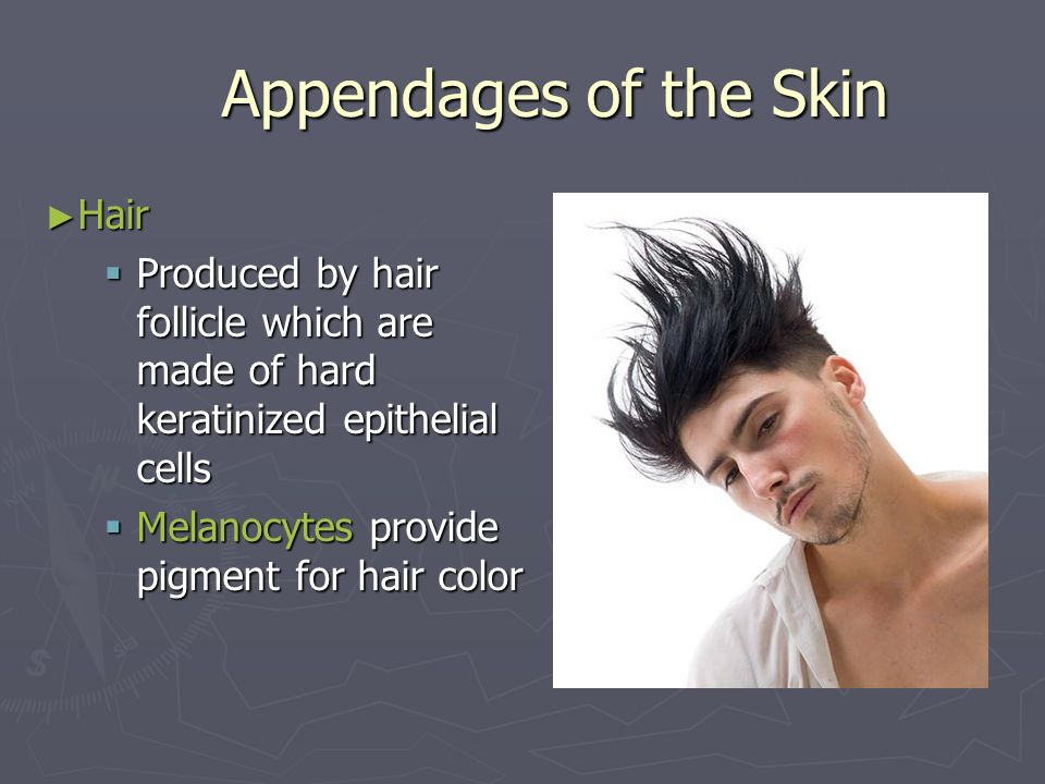 Appendages of the Skin Hair