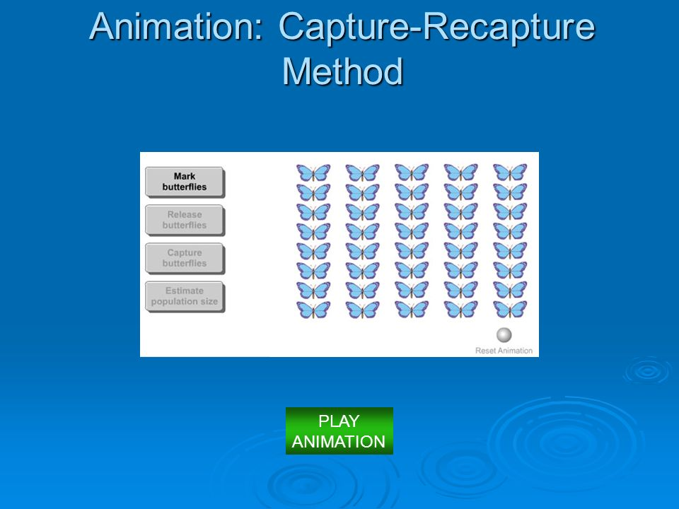 Animation: Capture-Recapture Method