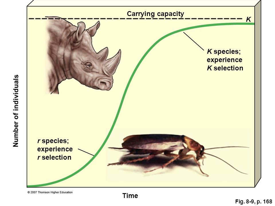 Carrying capacity K K species; experience K selection