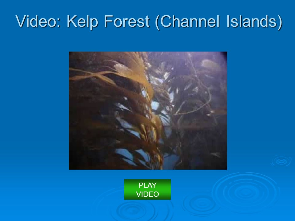 Video: Kelp Forest (Channel Islands)