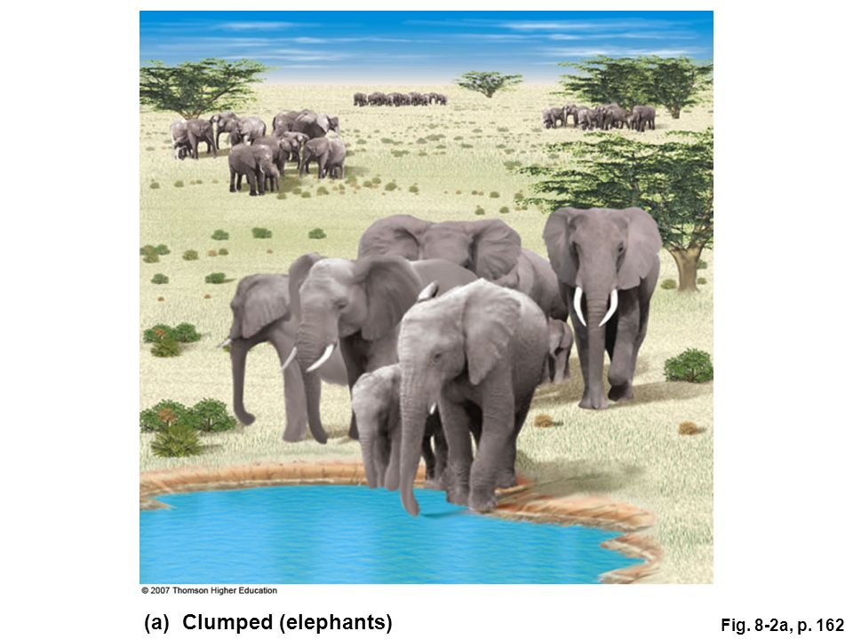 (a) Clumped (elephants)