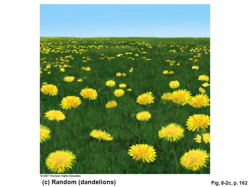 (c) Random (dandelions)