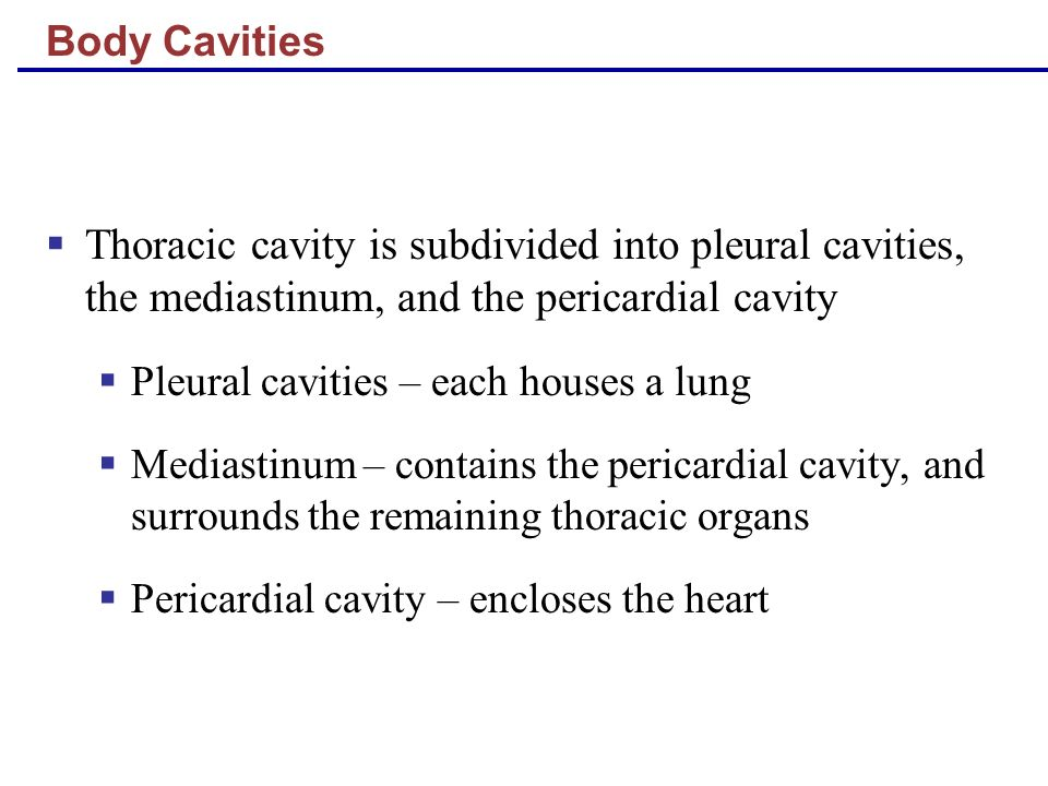Body Cavities Thoracic cavity is subdivided into pleural cavities, the mediastinum, and the pericardial cavity.