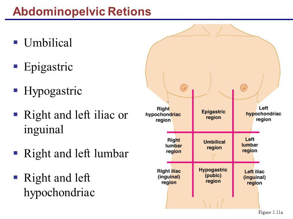Abdominopelvic Retions