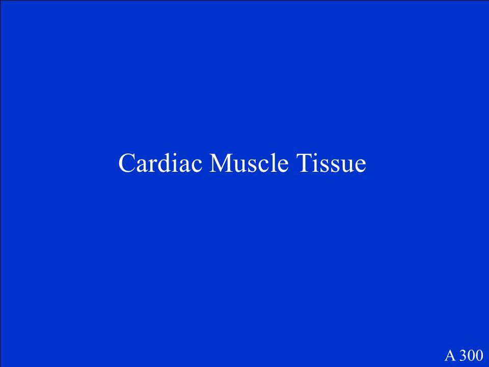 Cardiac Muscle Tissue A 300