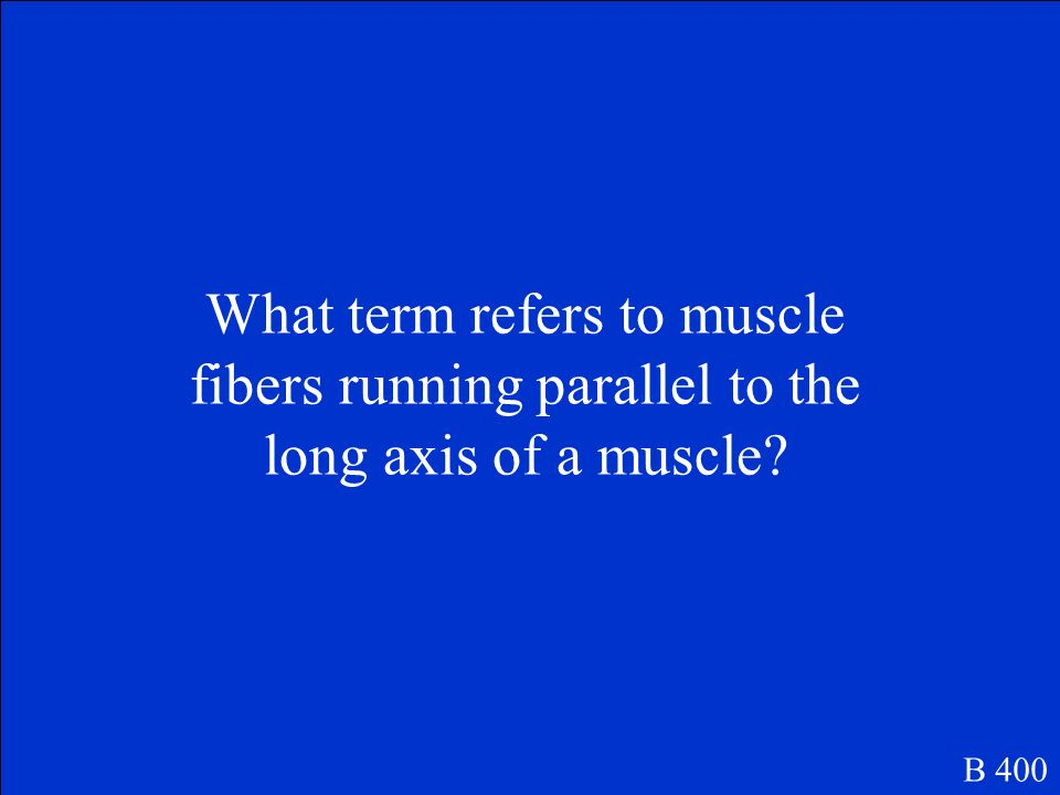 What term refers to muscle fibers running parallel to the long axis of a muscle