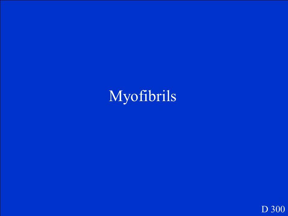 Myofibrils D 300