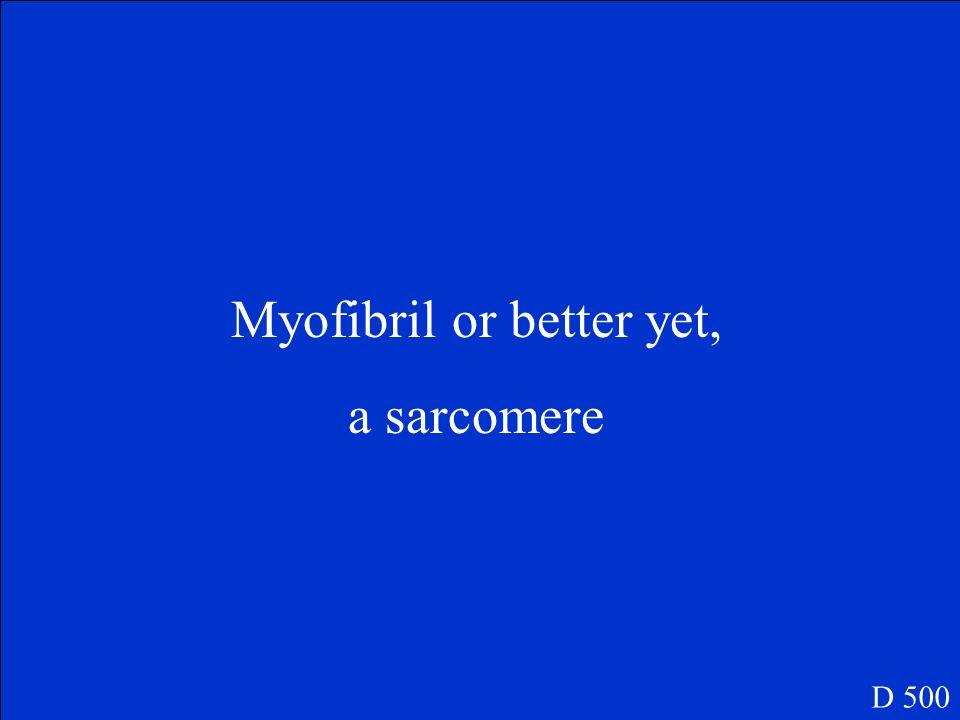 Myofibril or better yet,