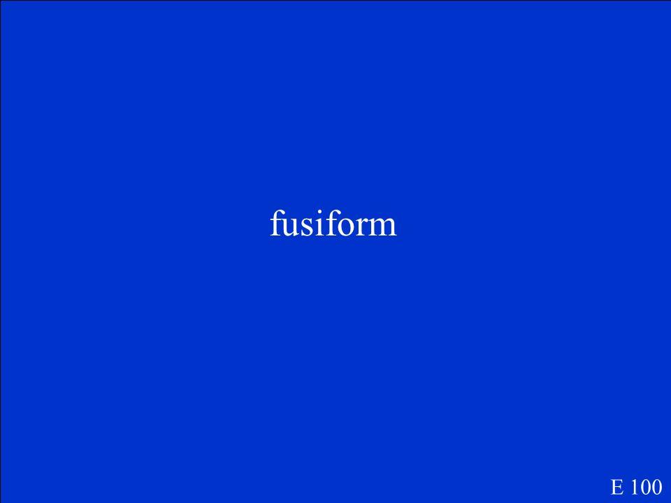 fusiform E 100