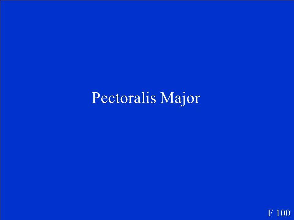 Pectoralis Major F 100