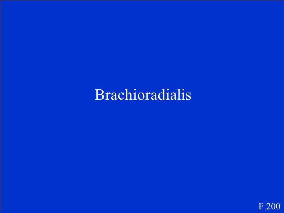Brachioradialis F 200