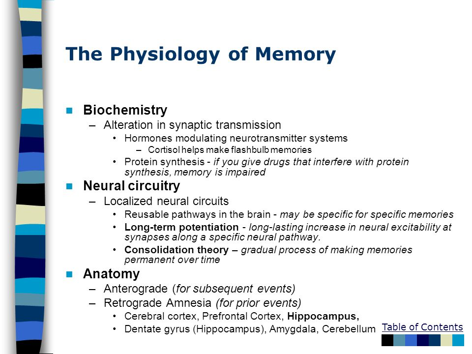 The Physiology of Memory