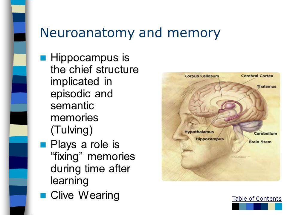Neuroanatomy and memory