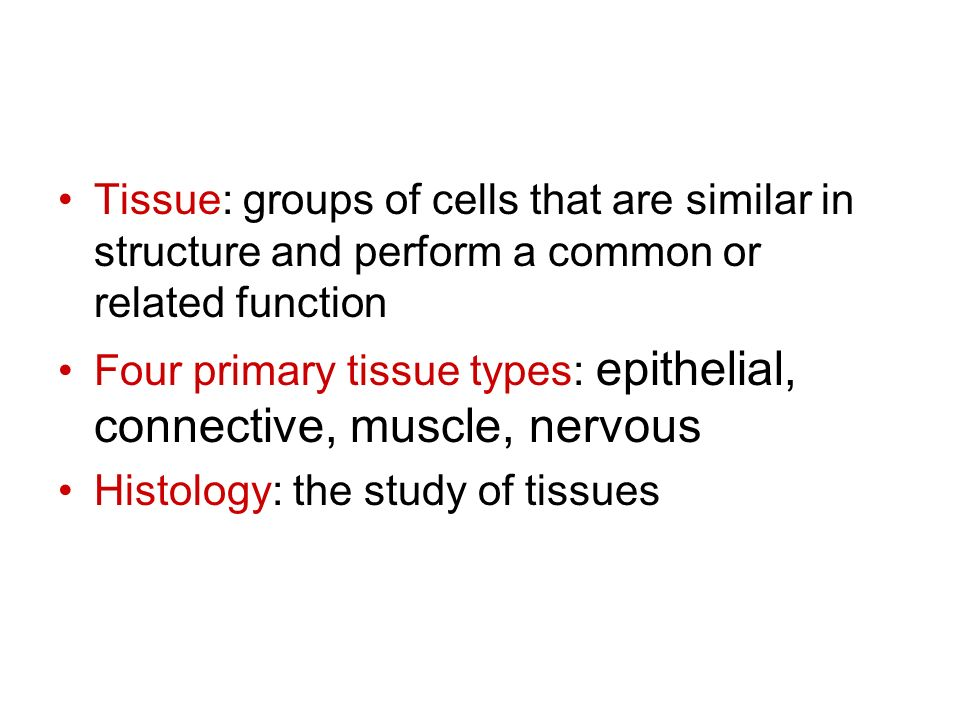 Tissue: groups of cells that are similar in structure and perform a common or related function