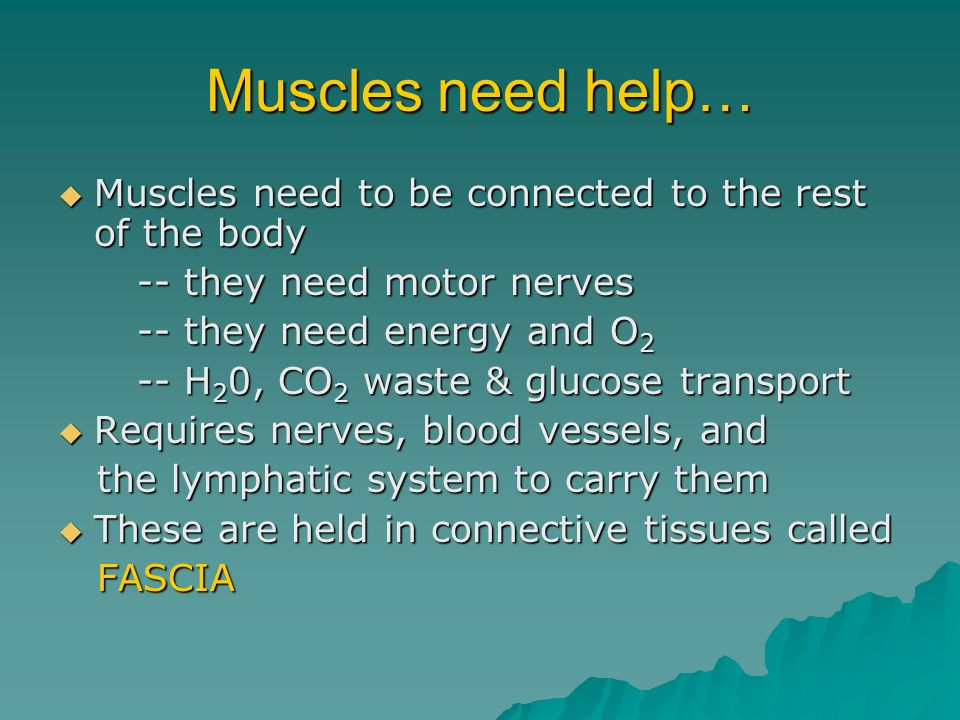 Muscles need help… Muscles need to be connected to the rest of the body. -- they need motor nerves.