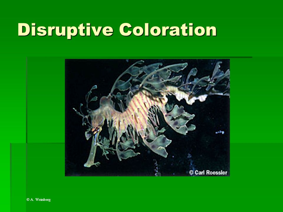 Disruptive Coloration