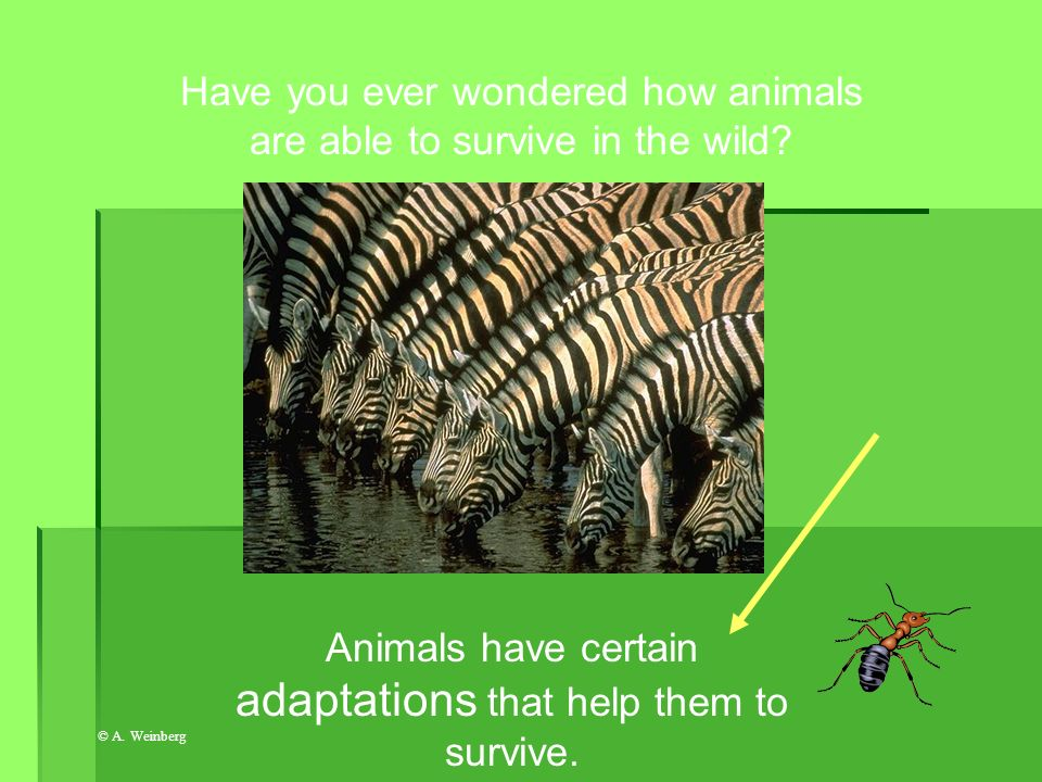 Have you ever wondered how animals are able to survive in the wild