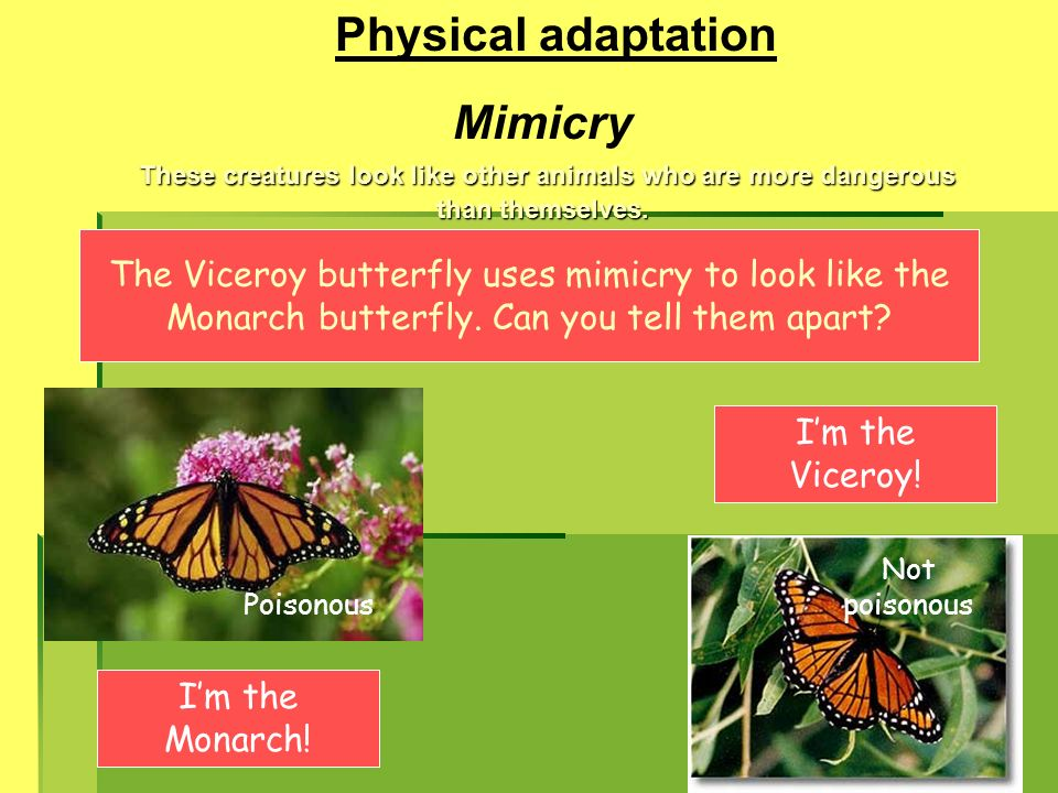 Physical adaptation Mimicry