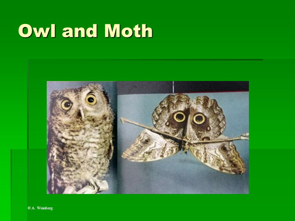 Owl and Moth