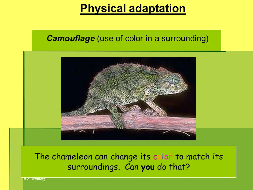 Camouflage (use of color in a surrounding)