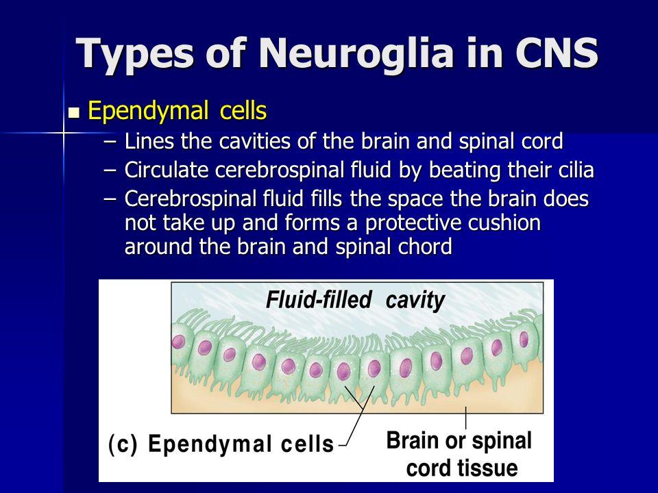 Types of Neuroglia in CNS