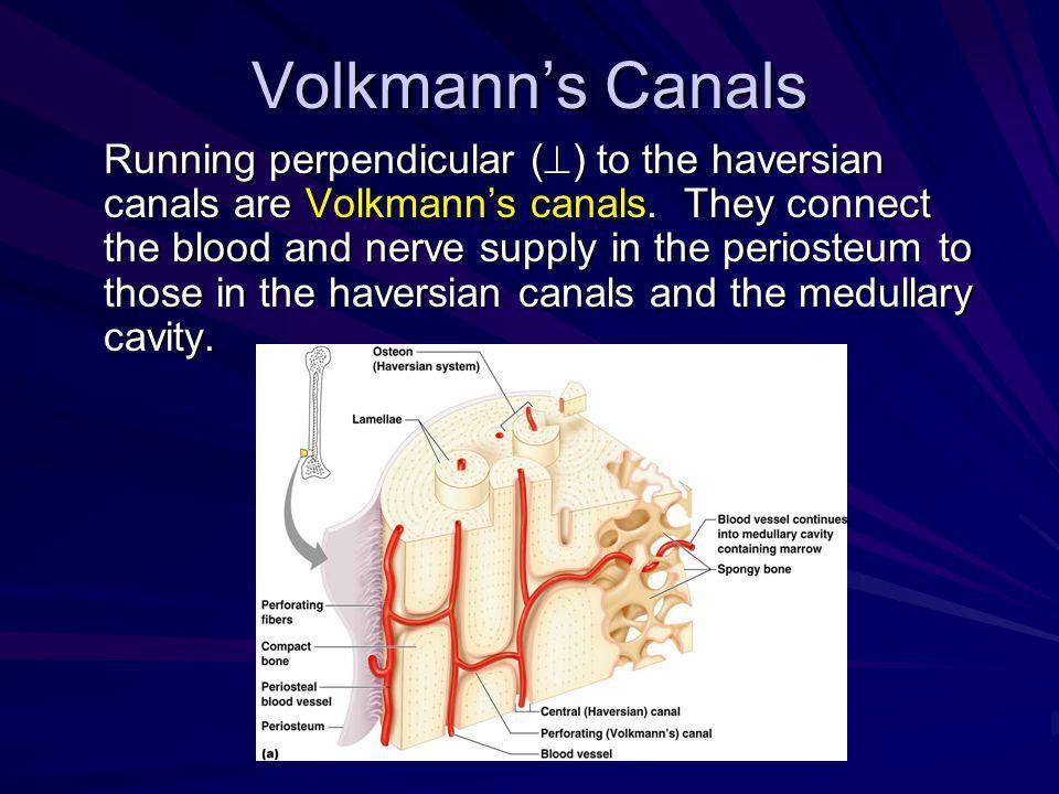 Volkmann's Canals