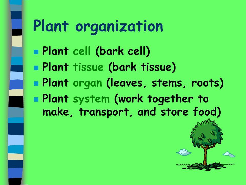 Plant organization Plant cell (bark cell) Plant tissue (bark tissue)