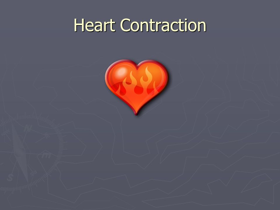 Heart Contraction