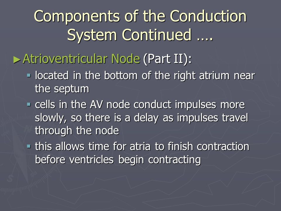 Components of the Conduction System Continued ….