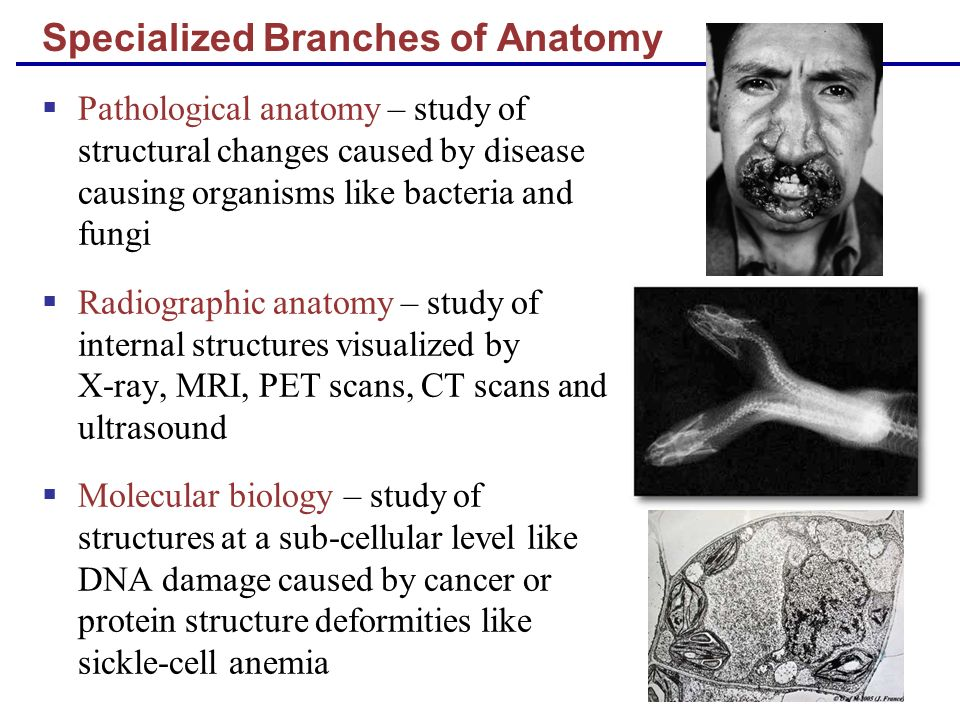 Specialized Branches of Anatomy