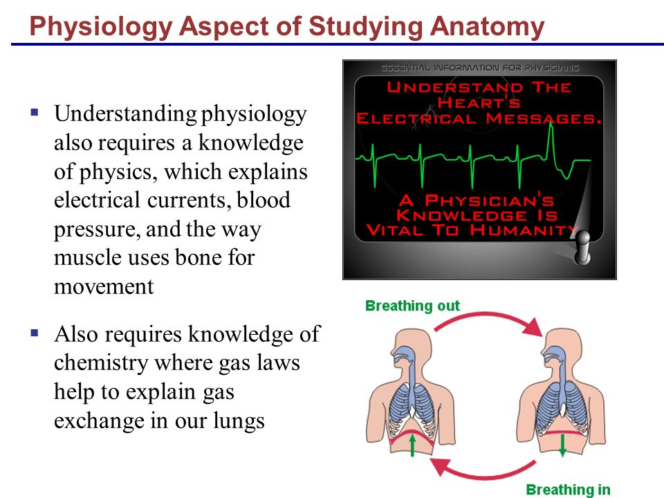 Physiology Aspect of Studying Anatomy