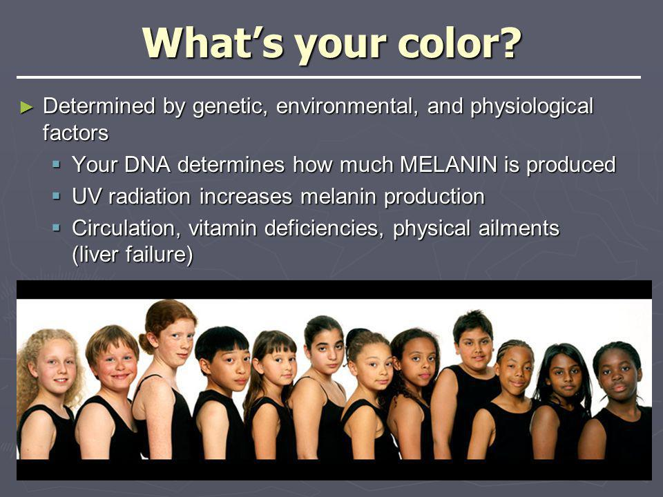 What's your color Determined by genetic, environmental, and physiological factors. Your DNA determines how much MELANIN is produced.