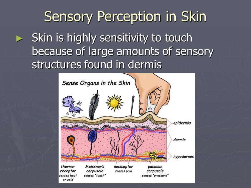 Sensory Perception in Skin