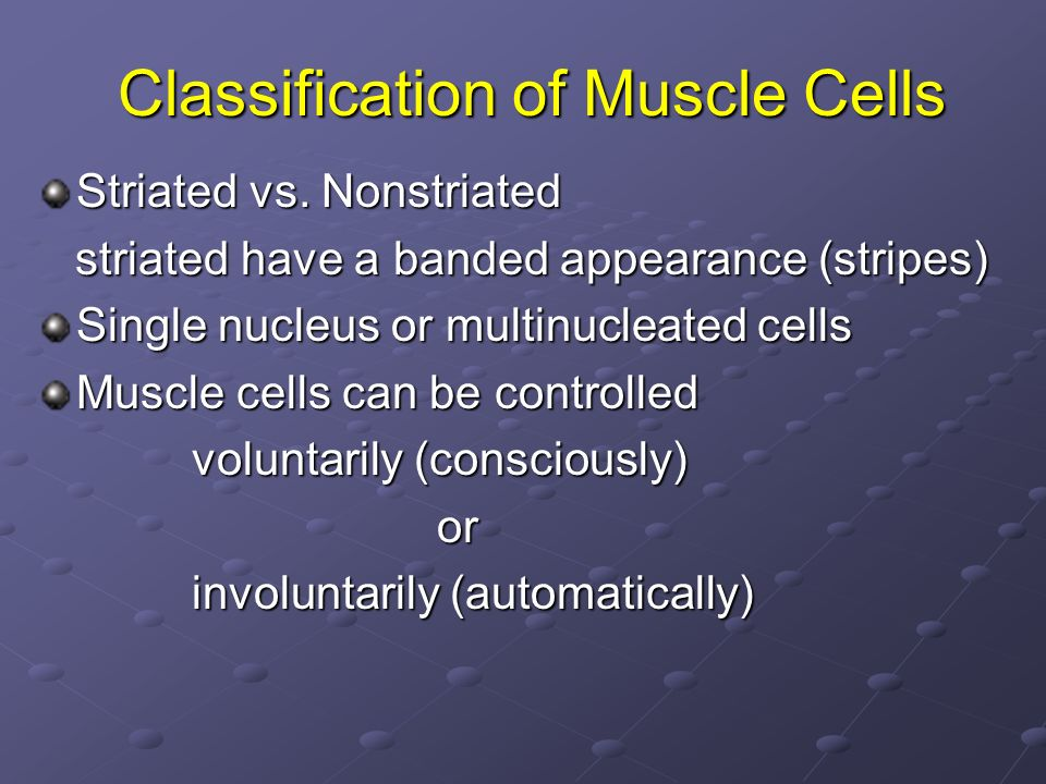 Classification of Muscle Cells