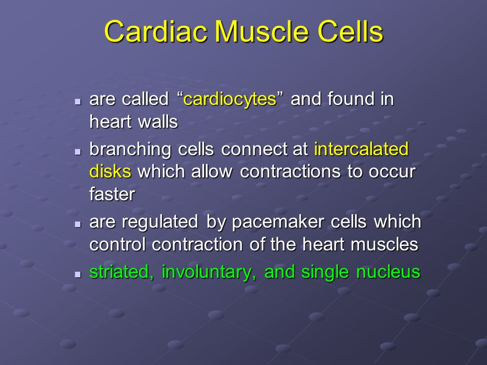 Cardiac Muscle Cells are called cardiocytes and found in heart walls