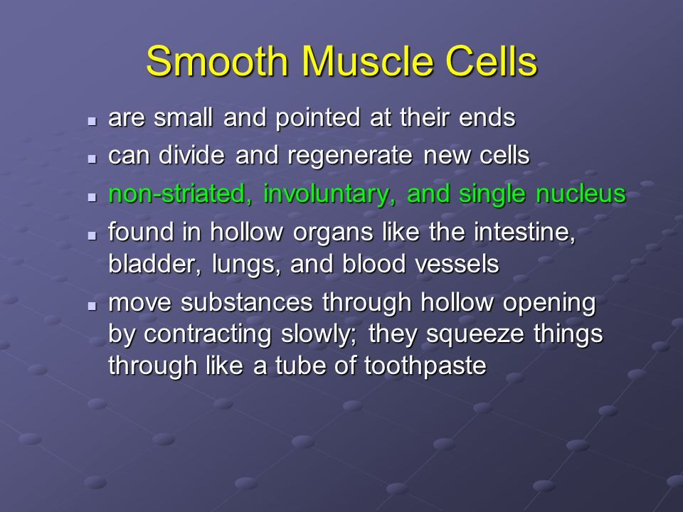 Smooth Muscle Cells are small and pointed at their ends