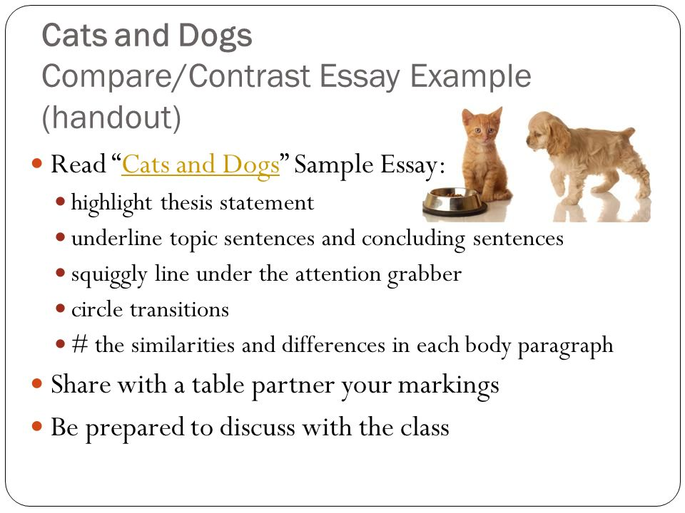 compare and contrast dog and cat essay Dogs and cats compare and contrast essay marielena mendoza eng 121 english compositions i instructor: cats vs dogs compare and contrast essay.