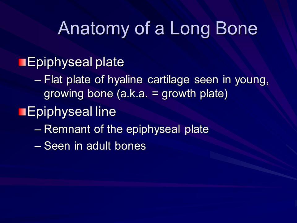 Anatomy of a Long Bone Epiphyseal plate Epiphyseal line