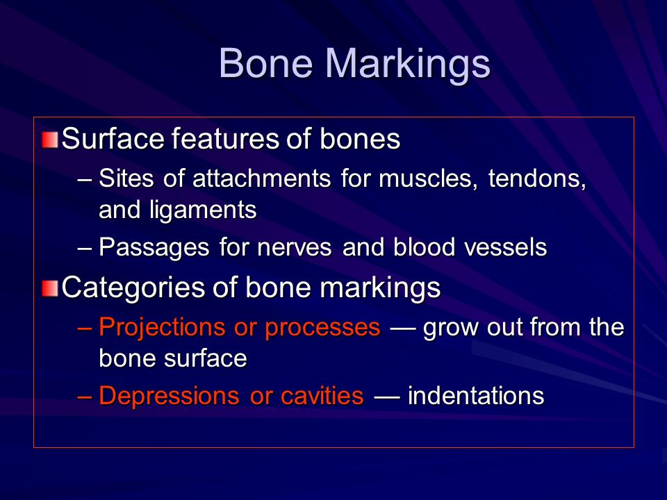 Bone Markings Surface features of bones Categories of bone markings