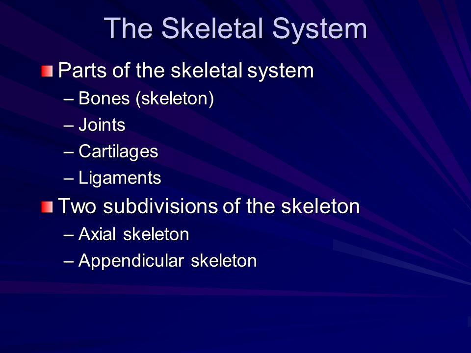 The Skeletal System Parts of the skeletal system