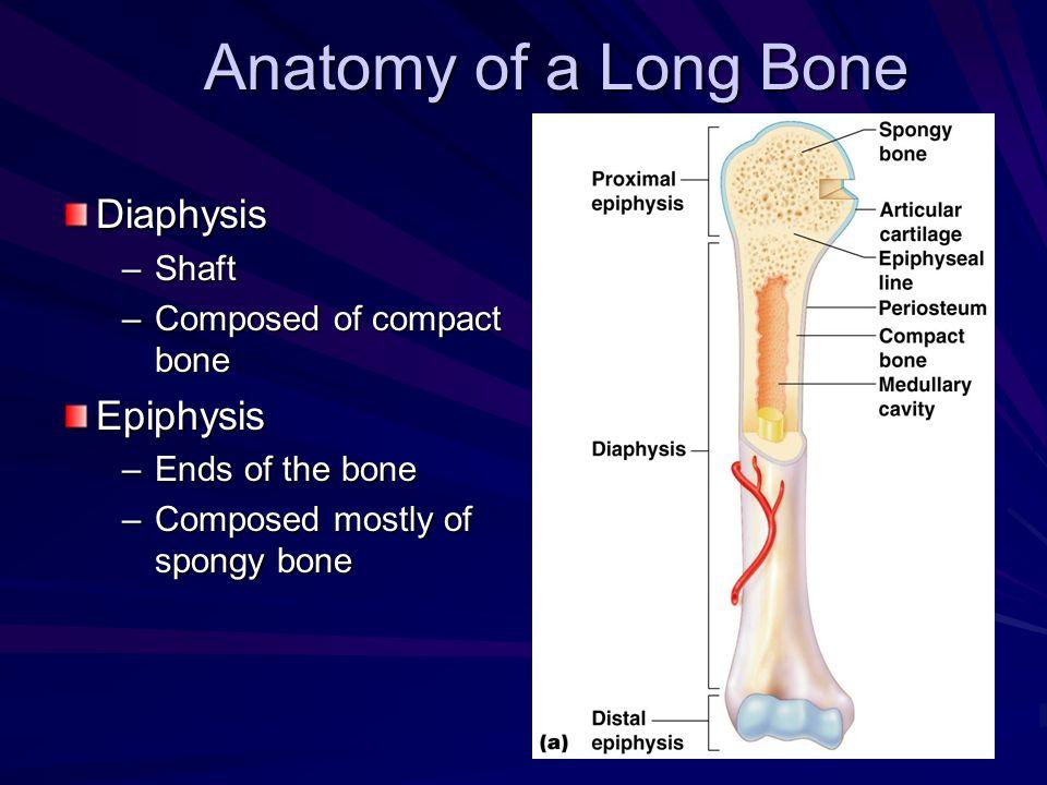 Anatomy of a Long Bone Diaphysis Epiphysis Shaft