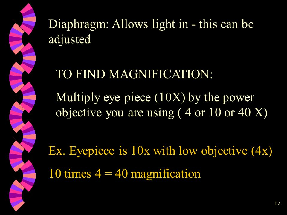 Diaphragm: Allows light in - this can be adjusted