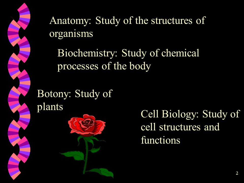 Anatomy: Study of the structures of organisms